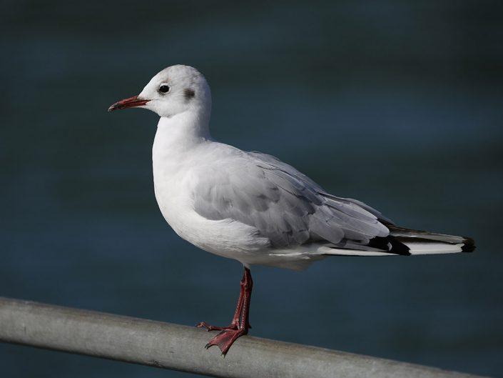 Photo ornithologie 10