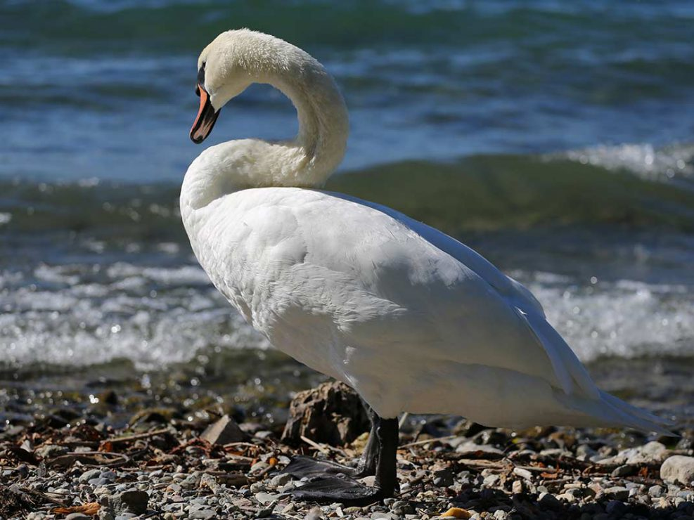 Photo ornithologie 13