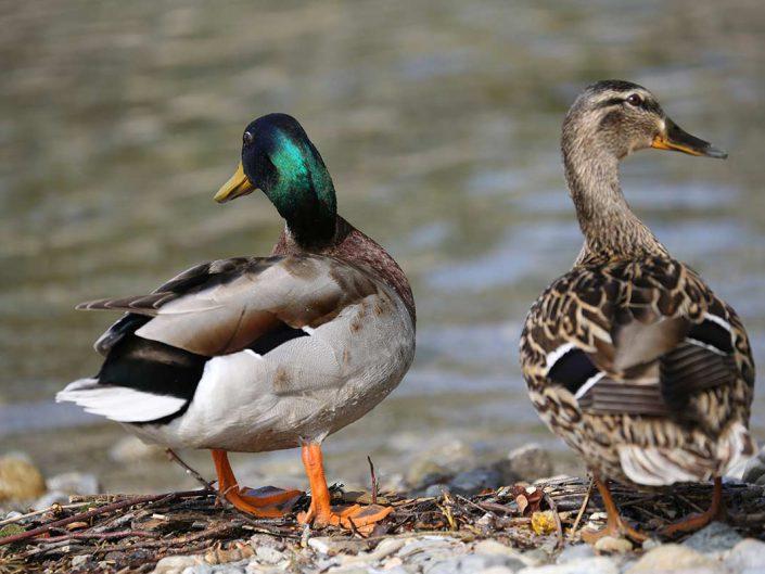 Photo ornithologie 15