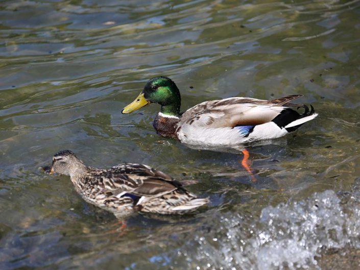 Photo ornithologie 18