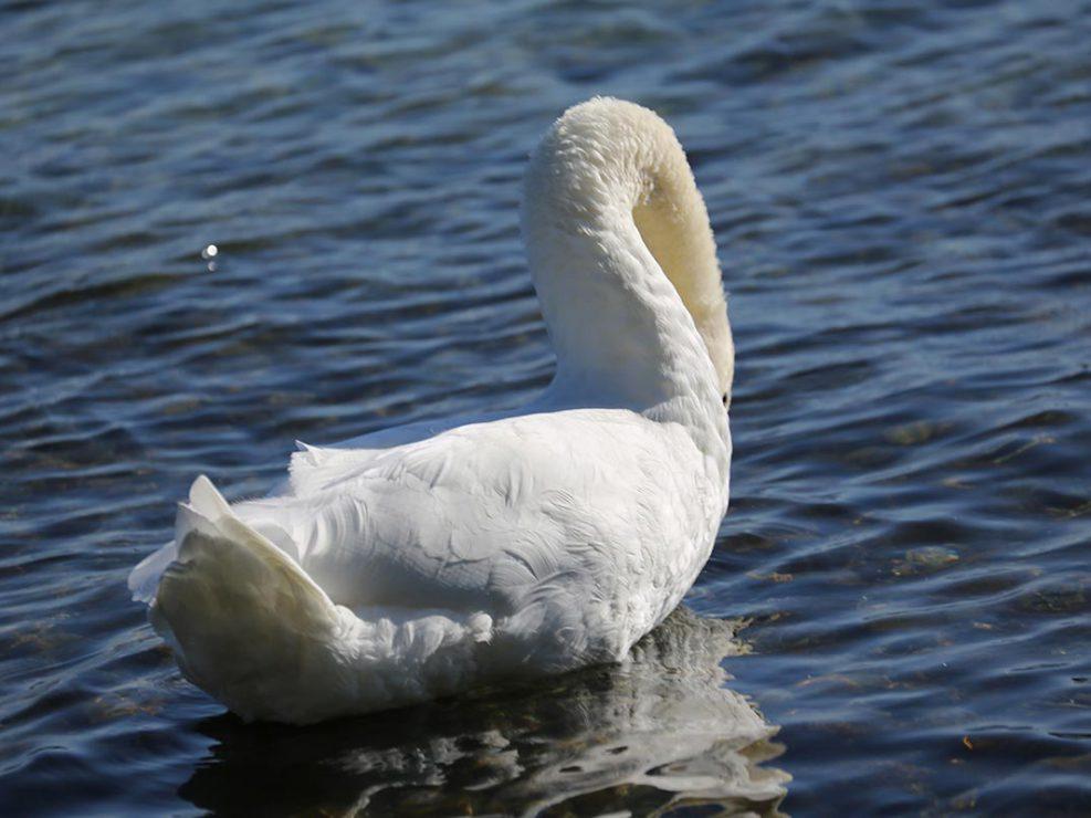 Photo ornithologie 21