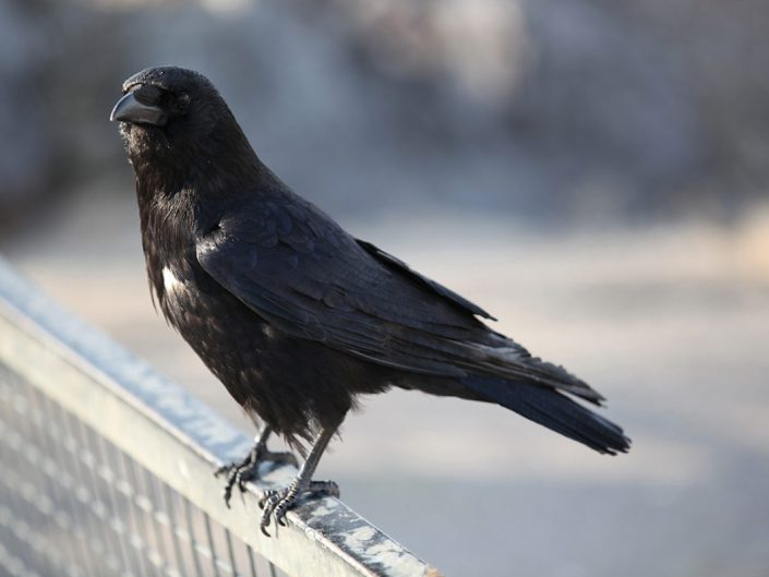 Photo ornithologie 23