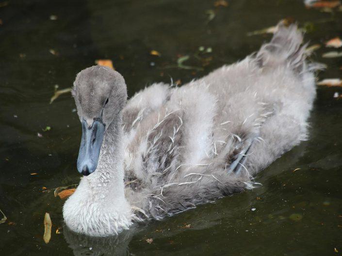 Photo ornithologie 24
