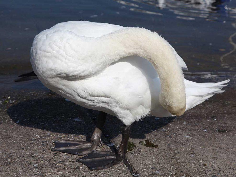 Photo ornithologie 25