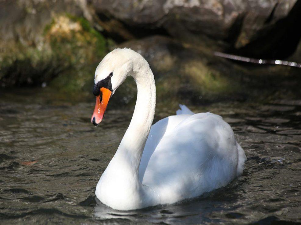 Photo ornithologie 26
