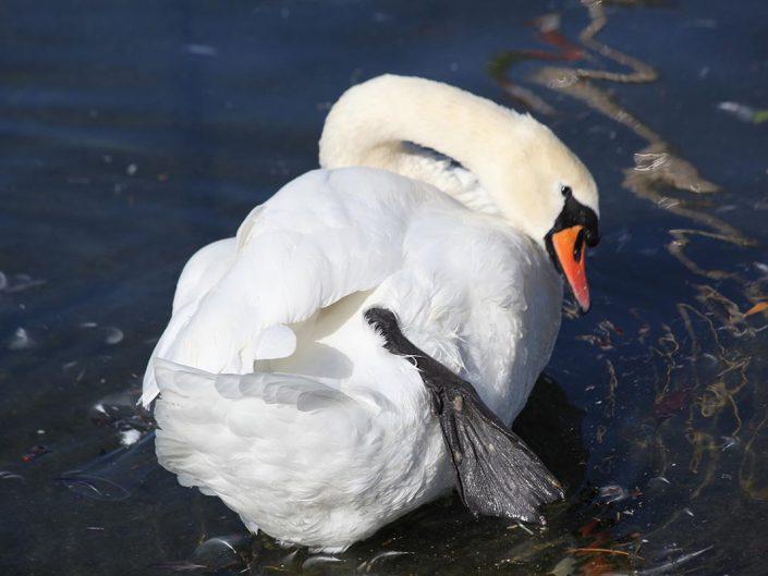 Photo ornithologie 27