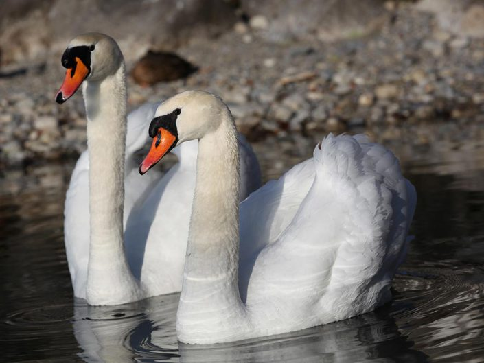 Photo ornithologie 28