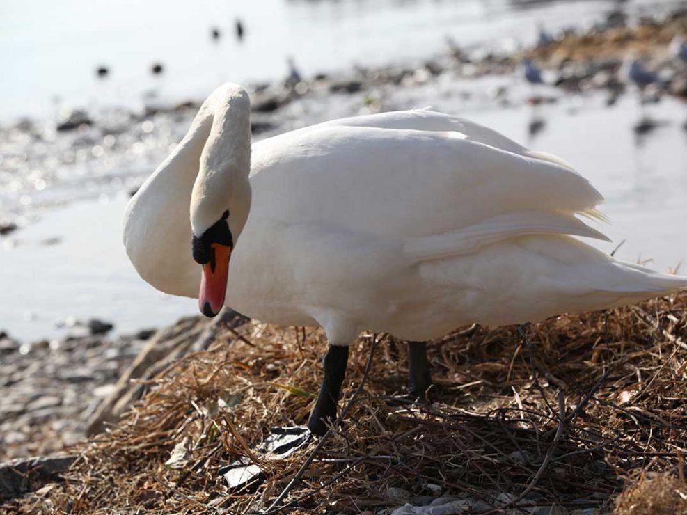 Photo ornithologie 29