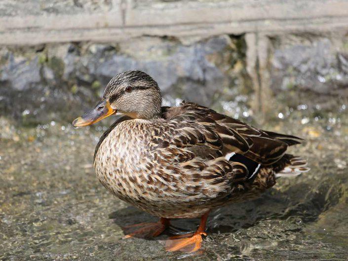 Photo ornithologie 3