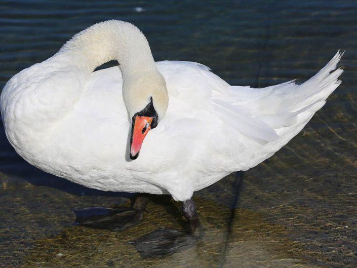 Photo ornithologie 31