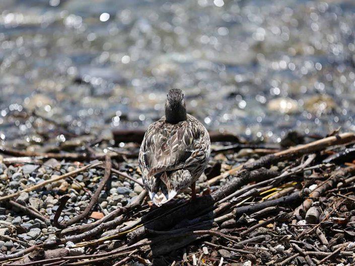 Photo ornithologie 32