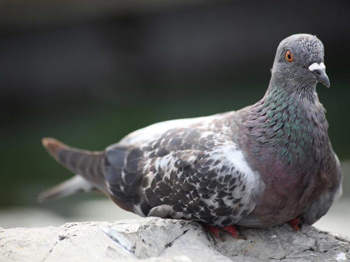 Photo ornithologie 33