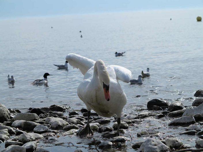 Photo ornithologie 34