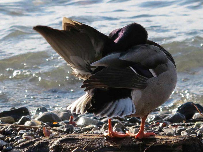Photo ornithologie 39