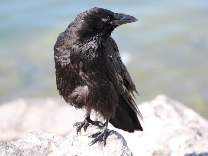 Photo ornithologie 4