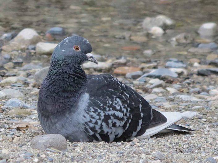 Photo ornithologie 43