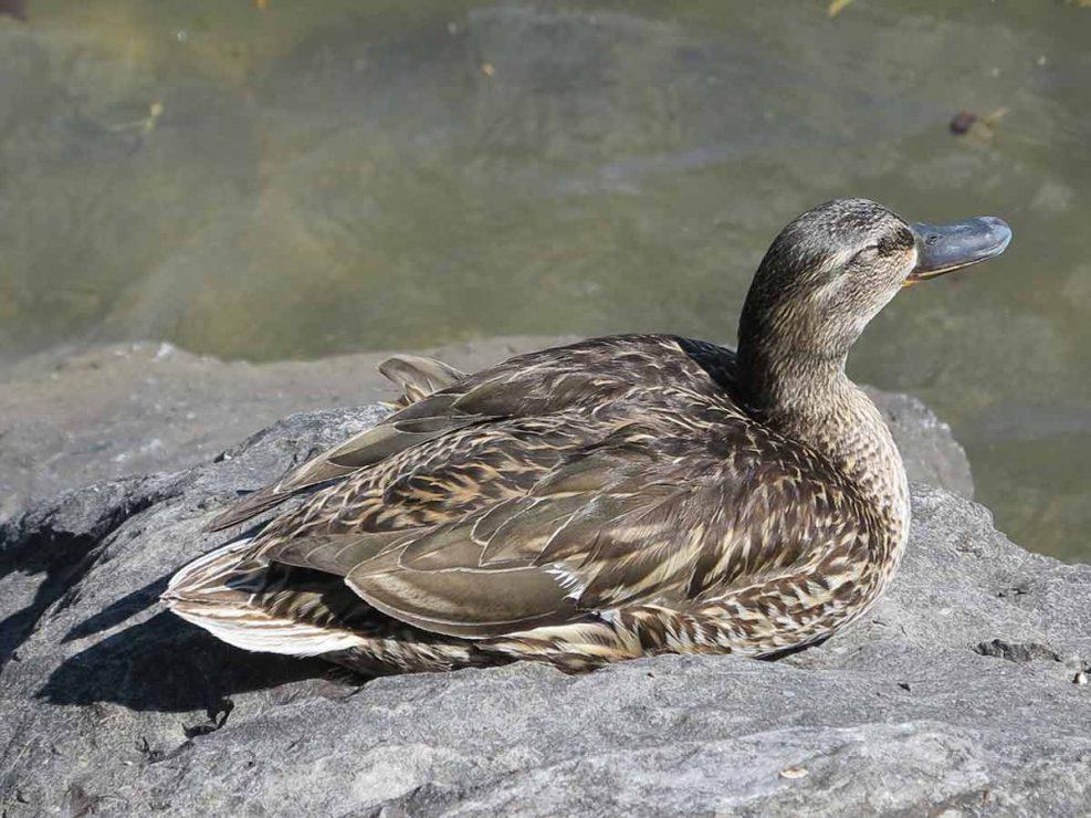 Photo ornithologie 45
