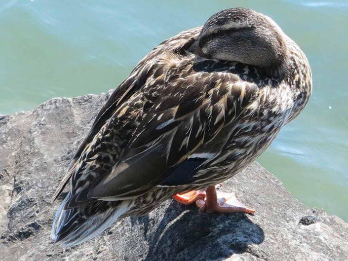 Photo ornithologie 46