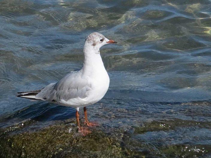 Photo ornithologie 48