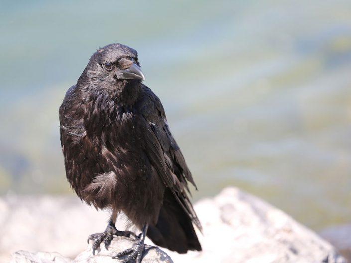 Photo ornithologie 5