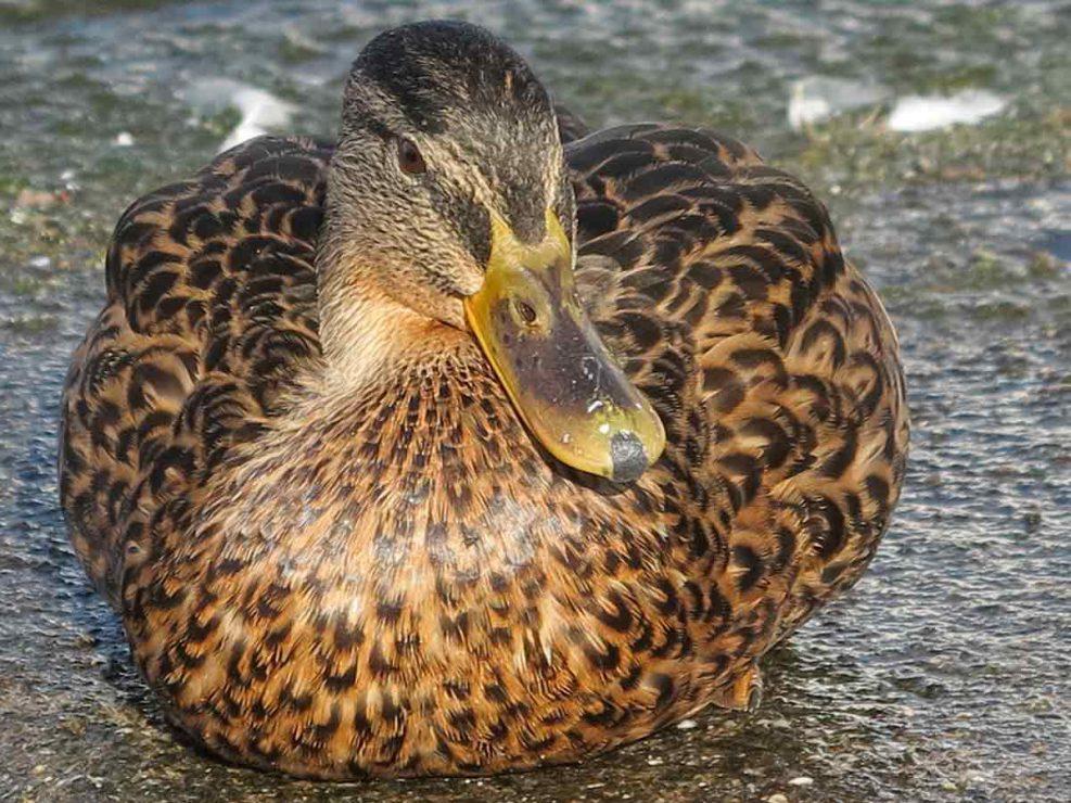 Photo ornithologie 50