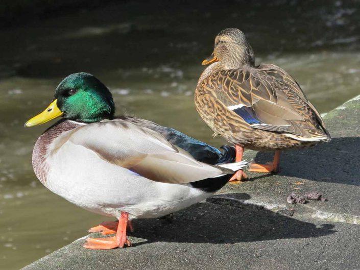 Photo ornithologie 51