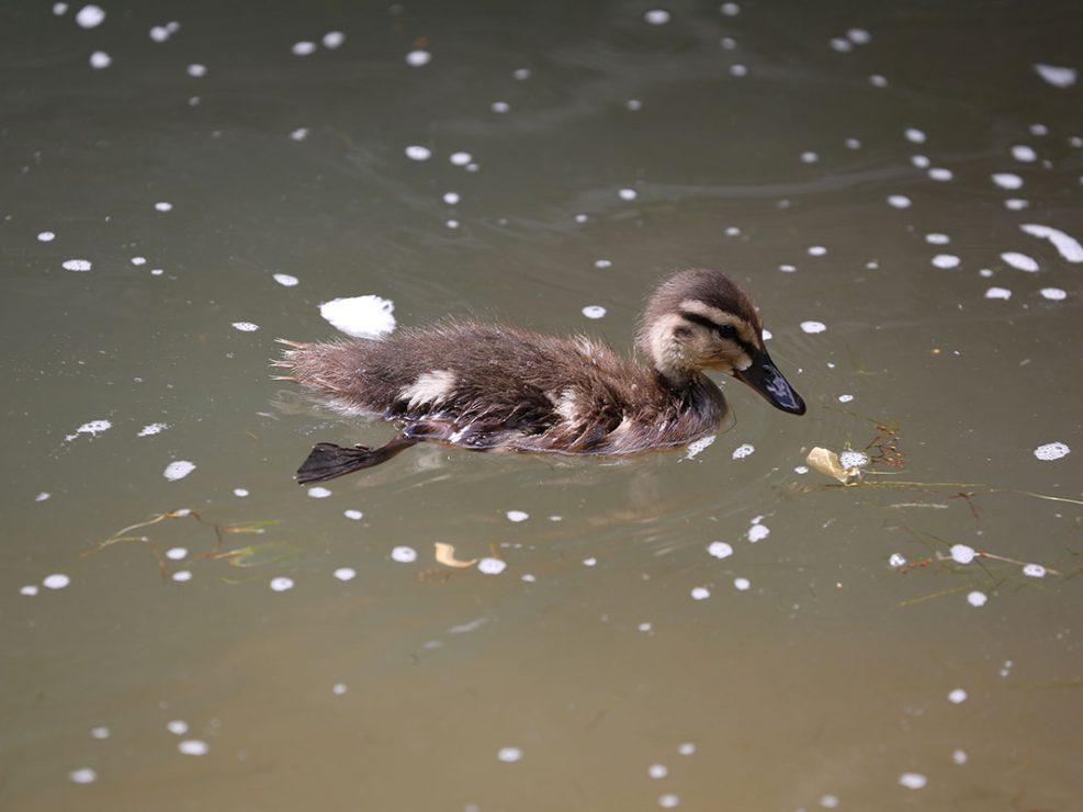 Photo ornithologie 6