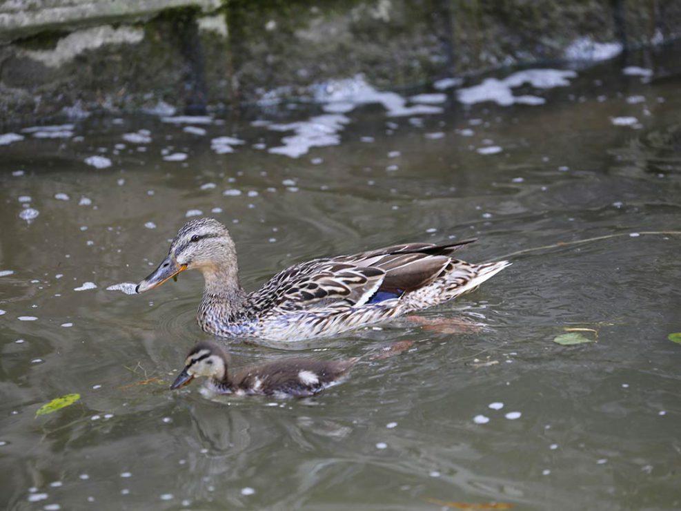 Photo ornithologie 7