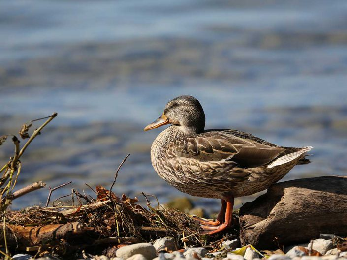 Photo ornithologie 9