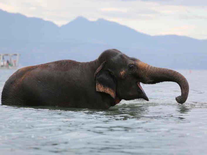 Photos éléphants par Maxphoto, photographe à Lausanne